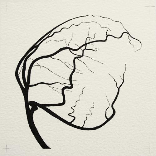 oona-culley-coronary-arterial-tree.05