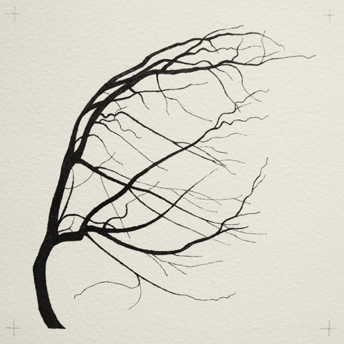 oona-culley-coronary-arterial-tree.07
