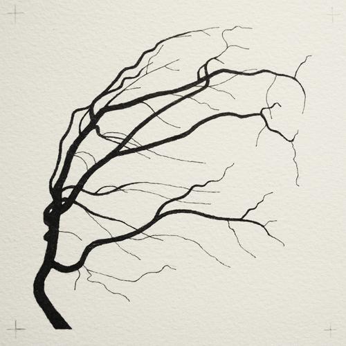 oona-culley-coronary-arterial-tree.09