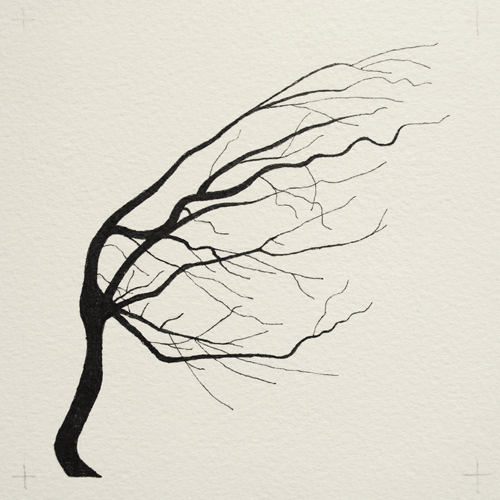 oona-culley-coronary-arterial-tree.11
