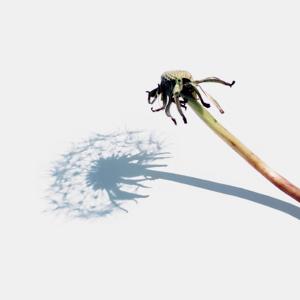 oona-culley-shadow-03