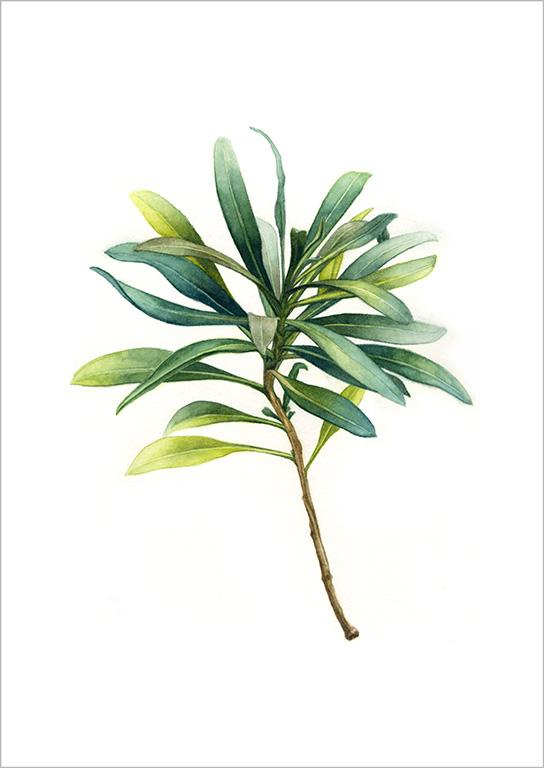 oona-culley-wallflower.1
