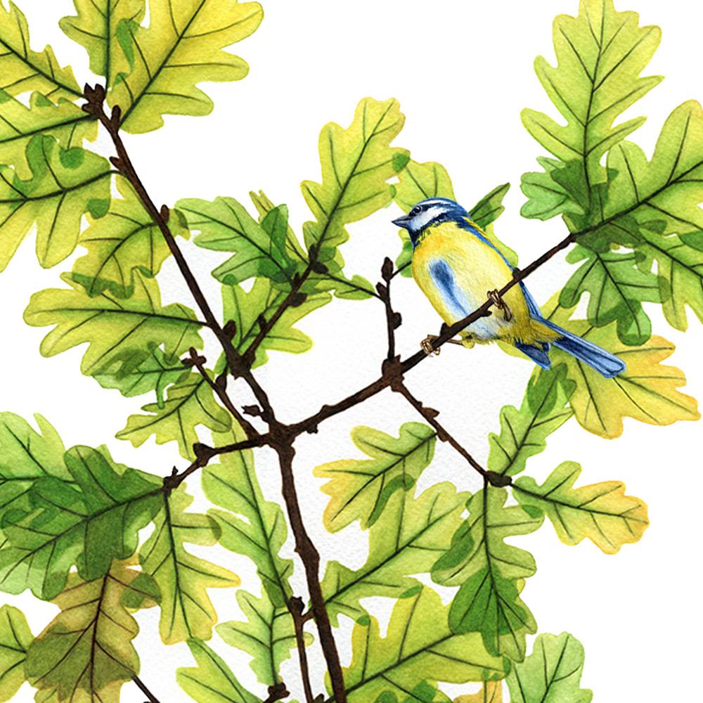 oona-culley-jred-bluetit3