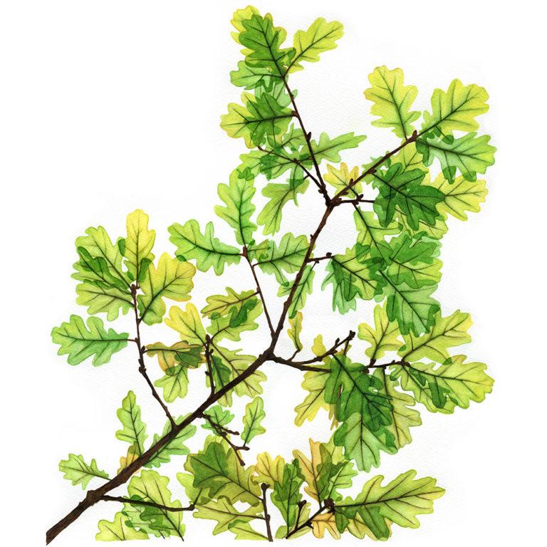 oona-culley-jred-oak02