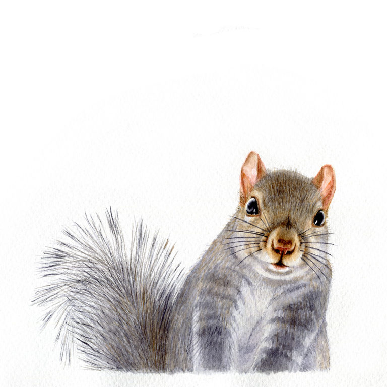 oona-culley-jred-squirrel