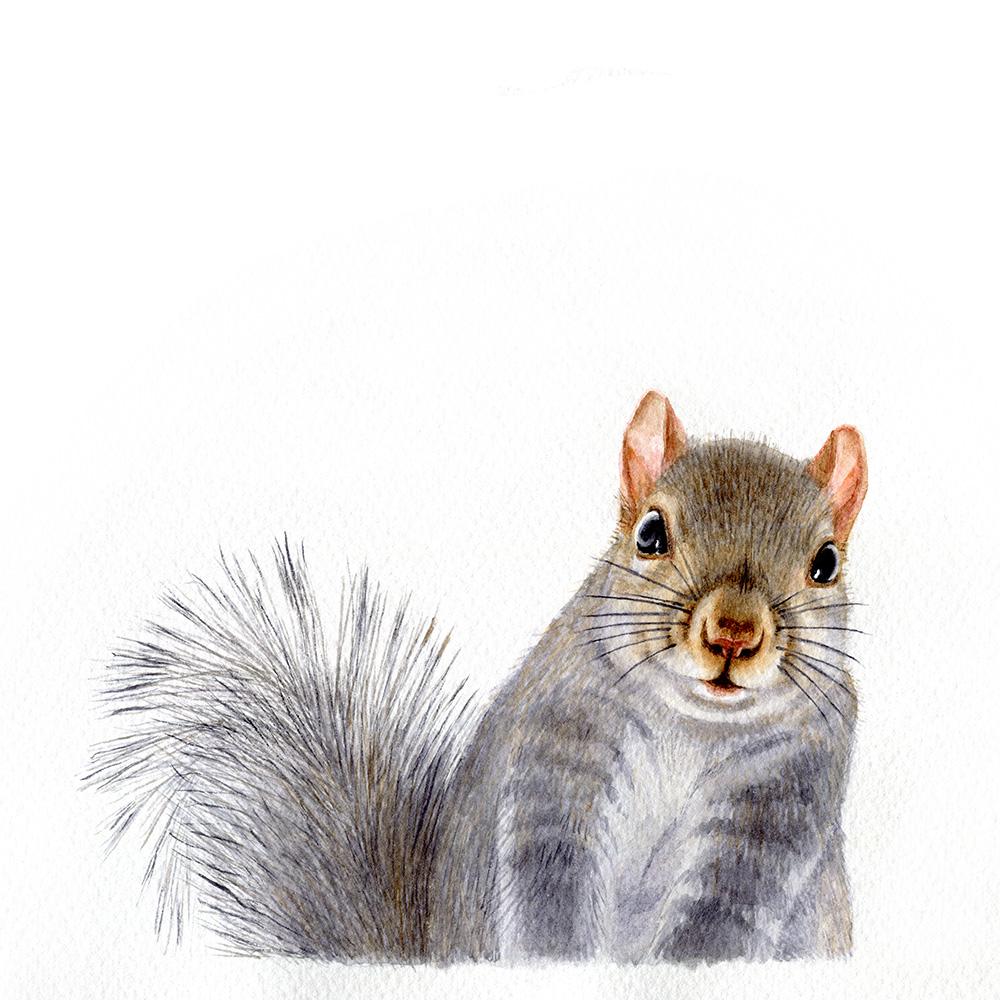 oona-culley-jred-squirrel